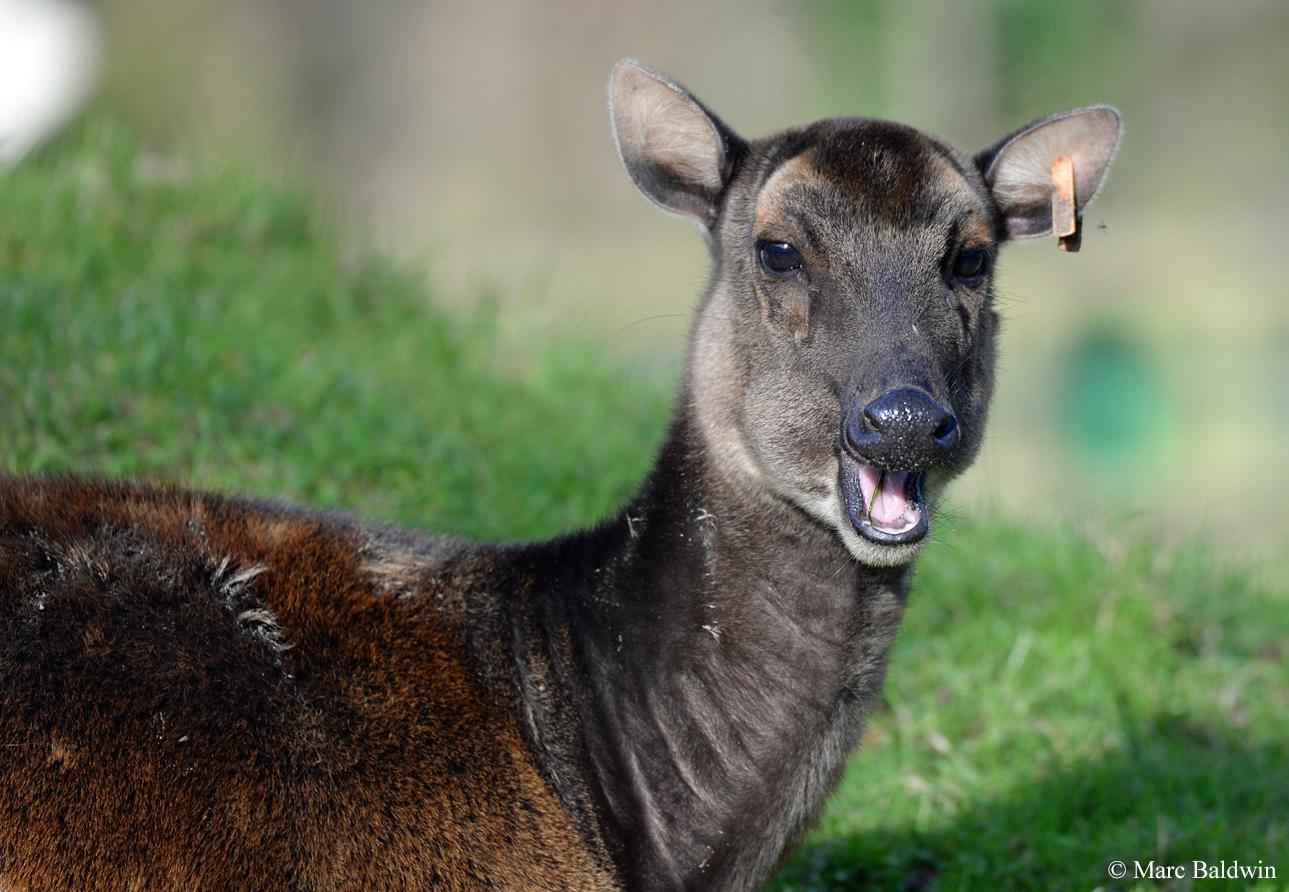 Deer Overview Feeding Rumination Wildlife Online