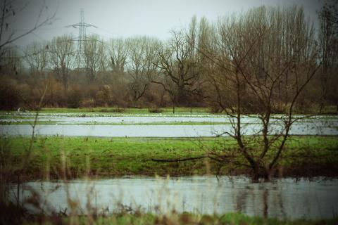 Gulls in a flooded field