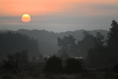 Misty New Forest dawn