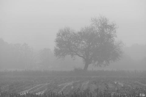 Misty tree in field