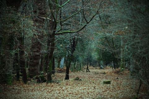 New Forest copse in winter