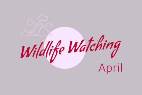 Wildlife Watching - April