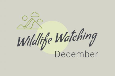 Wildlife Watching December Banner