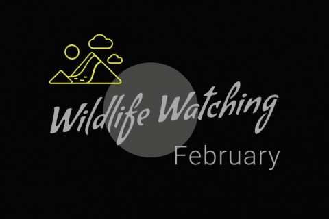 Wildlife Watching - February