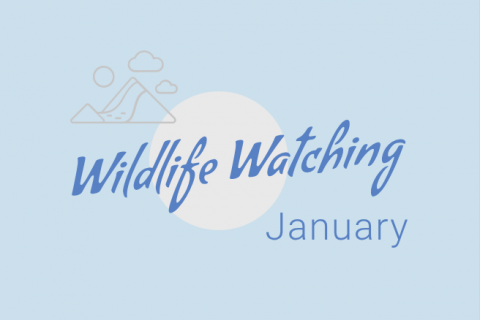 Wildlife Watching - January