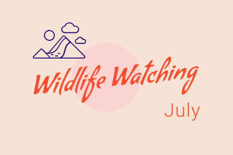 Wildlife Watching - July