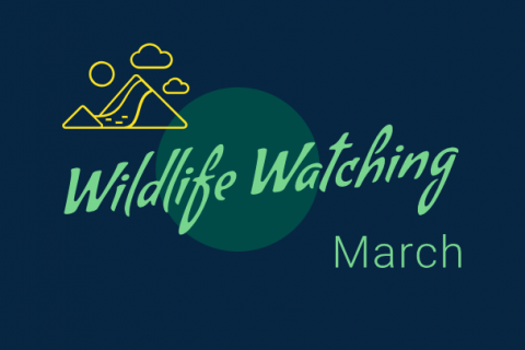 Wildlife Watching - March