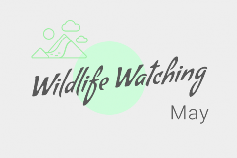 Wildlife Watching - May