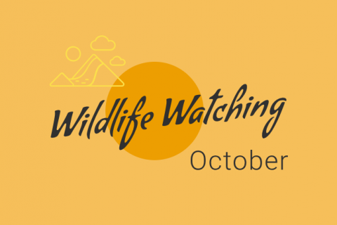 Wildlife Watching - October