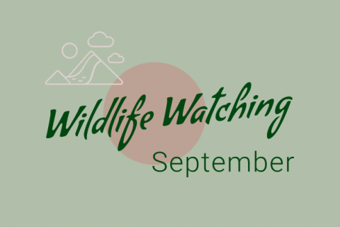 Wildlife Watching - September