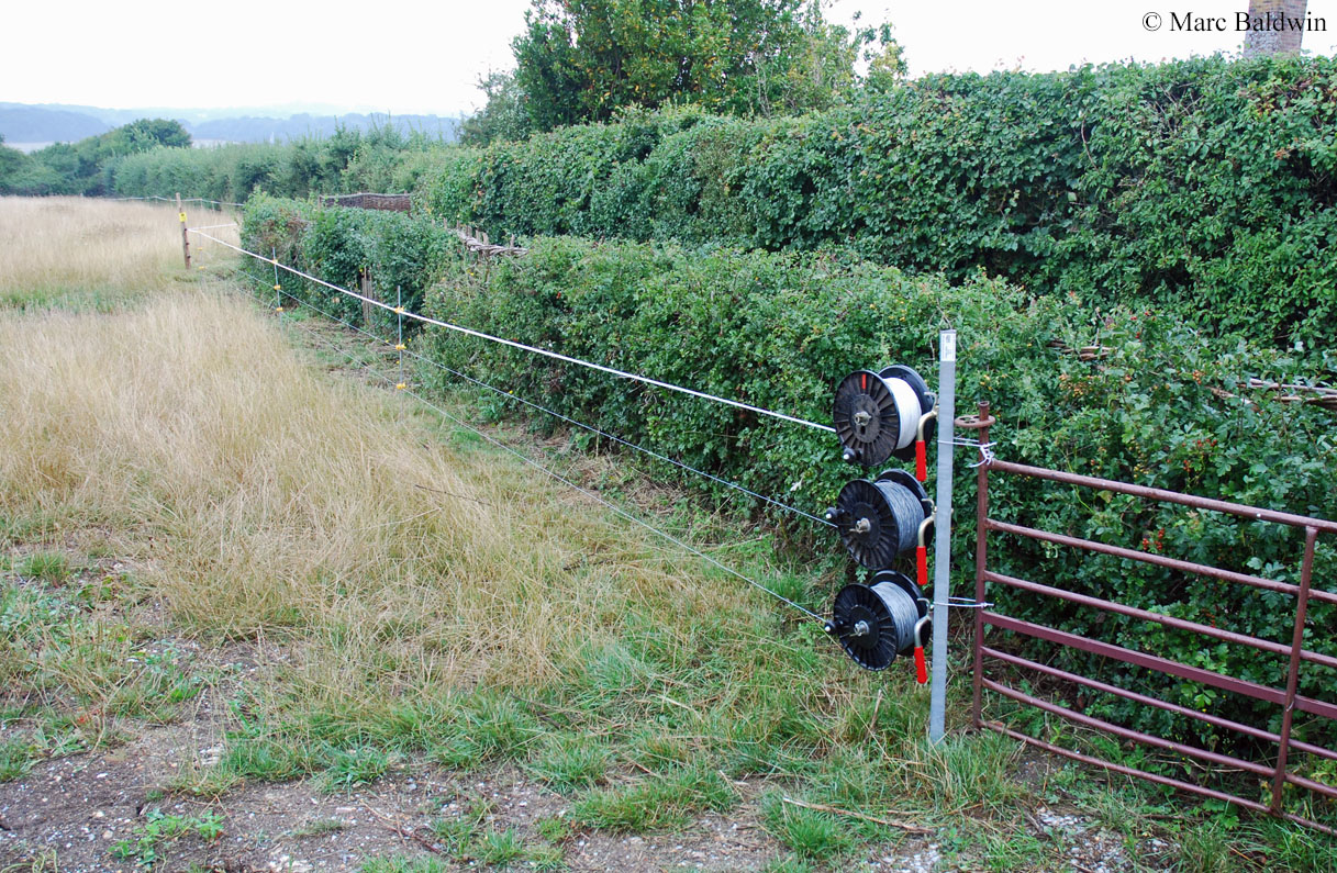 Deterring Foxes Wildlife Online Farmer Friendly Solar Based Electric Fencer For Rural Agriculture An Extendable Fence System The Use Of Fencing And Netting Is A Highly Effective Method Excluding But It Must Be Deployed With